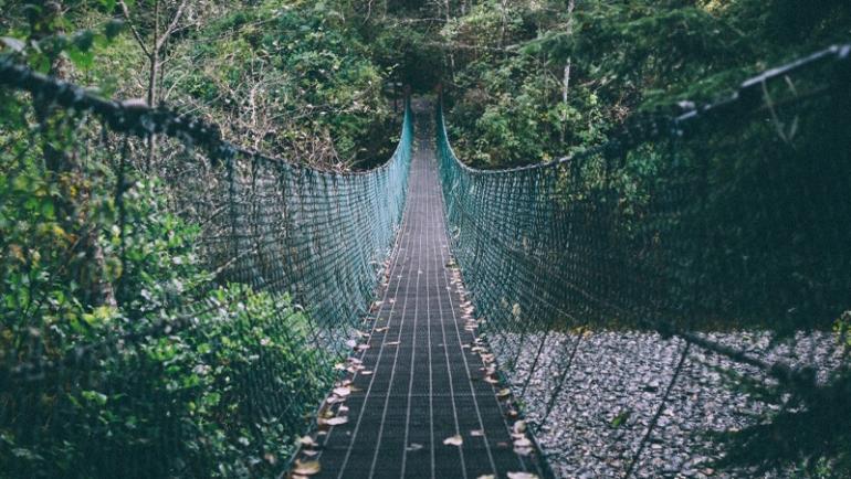 Lineamientos de Infraestructura Verde Vial – ¿cómo hacer para que la construcción de vías no afecte la fauna?